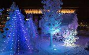 Зимний сад в Павловске